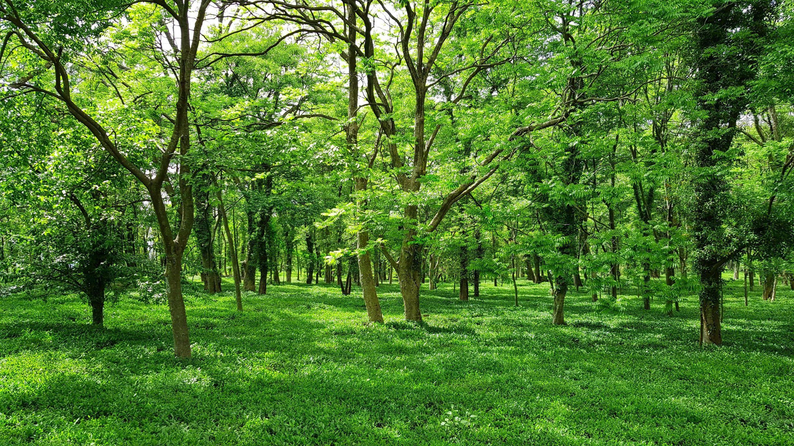 Pleine forêt